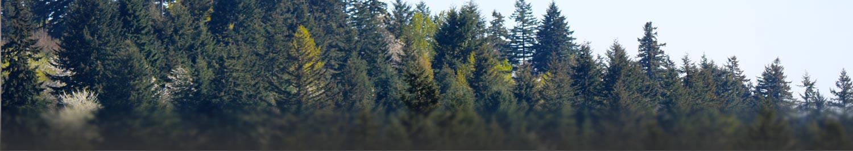 slide-trees